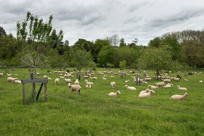 Concours général agricole agroforesterie, 2022. Troupeau moutons, arbres fruitiers, CEZ Bergerie nationale de Rambouillet (Yvelines)
