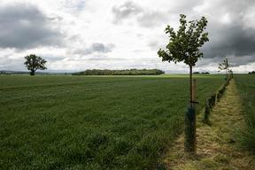 Concours général agricole agroforesterie, 2022. Haie champêtre et fruitière, Ferme de la Distillerie à Gouzangrez (Val d'Oise)